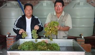 Bodega Don Goyo, de singanis de primera a vinos Bramador…