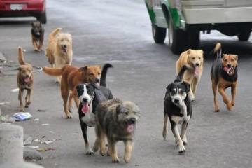 Camargo: Llaman a participar del concurso perros sin raza