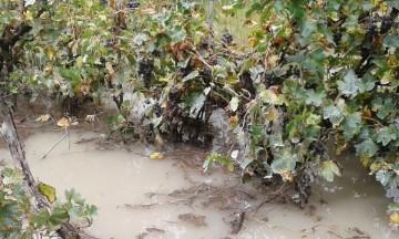 Desborde de ríos Chico y Grande causa daños en 19 comunidades