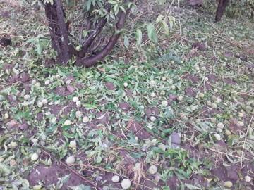 Fuerte granizada en Charpaxi (Villa Abecia) ocasiona grandes daños