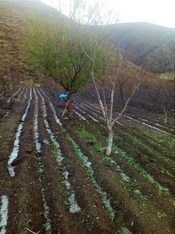 Granizada daña el durazno de cuatro comunidades en Camargo