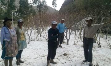 Granizada deja sin producción a dos comunidades de Camargo
