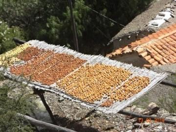 Lluvia pone en riesgo producción de papa y mok'o chinchi en San Lucas