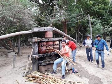Productores de Pilaya se asocian para mejor la calidad del cañazo