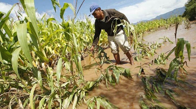 Lluvia y granizada causan desastres en cultivos de 185 familias