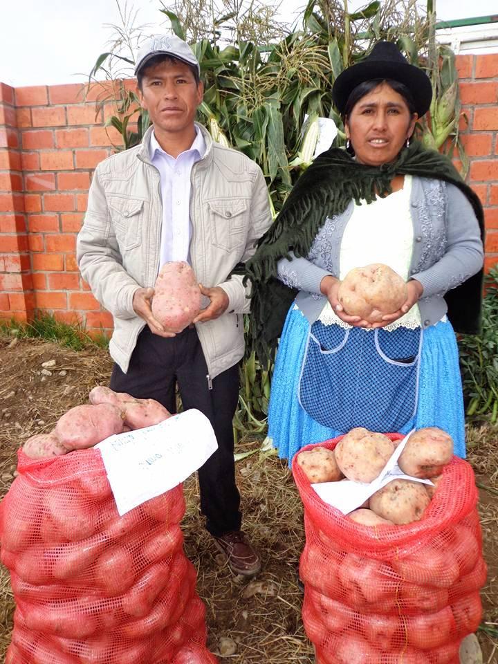 Productores de papa y cebolla están preocupados por los bajos precios