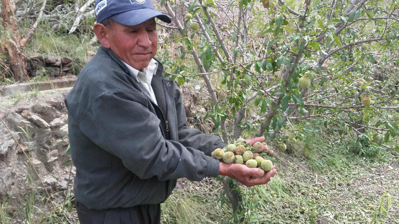 Productores quieren salvar las plantas de durazno tras la granizada