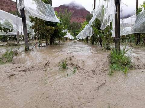 Riada: Estiman 95% de pérdida de uva en el valle de Cinti