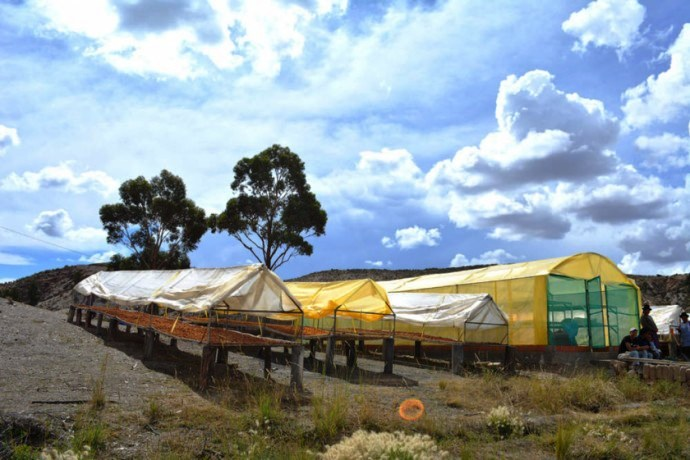 San Lucas registra una producción de 119 mil quintales de durazno